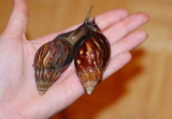 Knubbelchen (rechts) und MaPa (links)