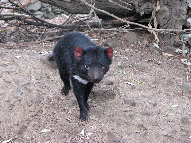 tasmania-2009-175