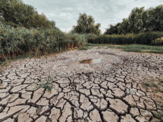 Bucurestiul risca sa ramana fara Delta Vacaresti. ONG-ul care a infiintat parcul acuza Agentia pentru Arii Protejate ca lasa rezervatia naturala sa moara