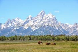 36 - Grand Teton, USA Globe called home Grand Teton, USA: Yhdysvaltain Wyomingissa Yellowstonen eteläpuolella sijaitseva Grand Tetonin kansallispuisto on tunnettu vuorista, jotka kohoavat yllättäen yli kaksi kilometriä viereistä laaksoa korkeammalle. Biisonilaumat vaeltavat kesäisillä niityillä, mutta vuorten huipuilla lumi säilyy ympärivuotisesti.