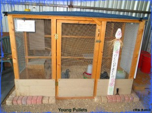 Young Pullet Coop 111015