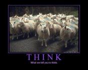 like-sheeple-like-sheep