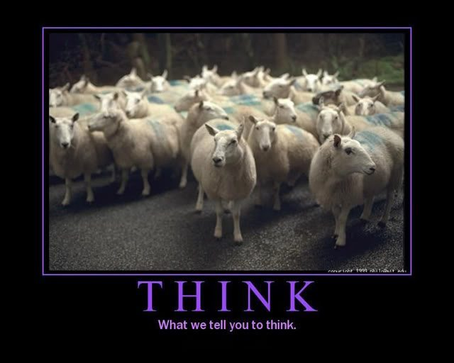 Sheep behavior