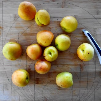 Apricots from the orchard