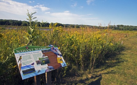 Nahant Marsh education signage in front of marsh plants