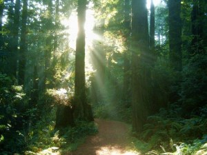 Sunlight in the Redwoods, Arcala, CA by Robert Schadt at CCC