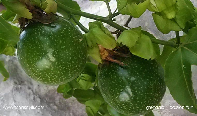 passionfruit-grenadia-haiti