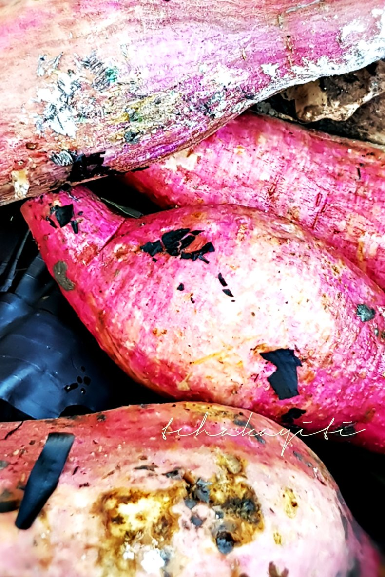 Haitian sweet potatoes have an outer skin that is more on the pinkish side of the color spectrum. | tchakayiti.com