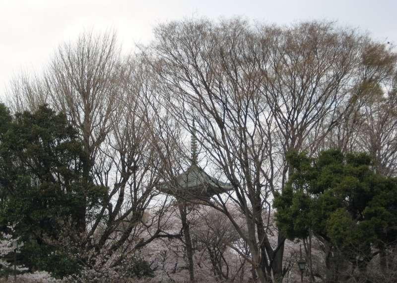 Sansenke and Sen no Rikyū's descendants