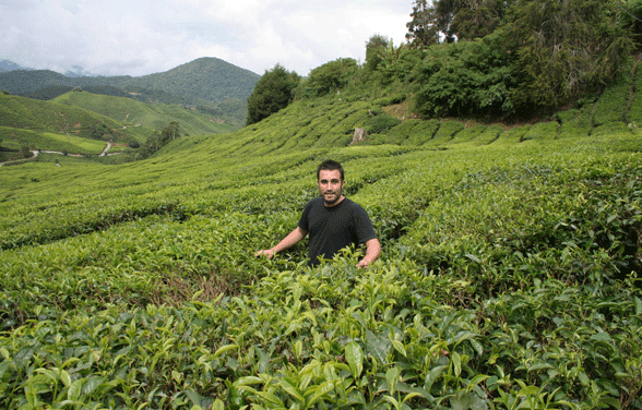 The World of Tea wins at World Tea Awards