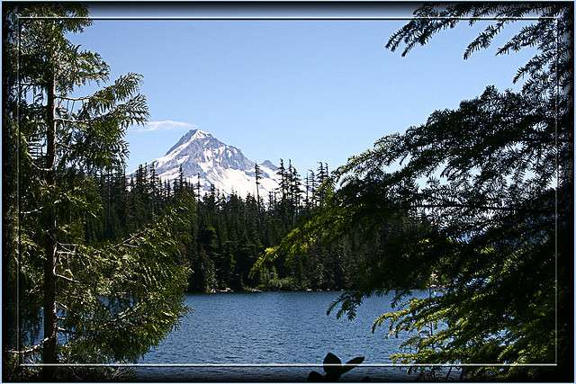 Tea of the Pacific Northwest