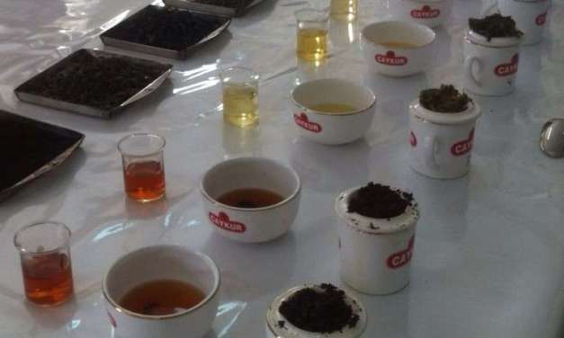 An insider's look at the Turkish tea industry and beyond