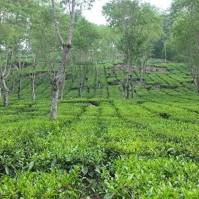 Wonosari plantation
