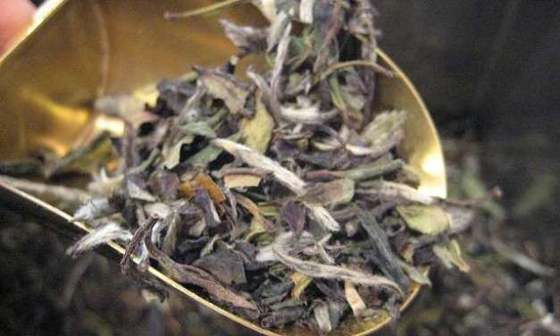 Blast From the Past: Two styles of white tea