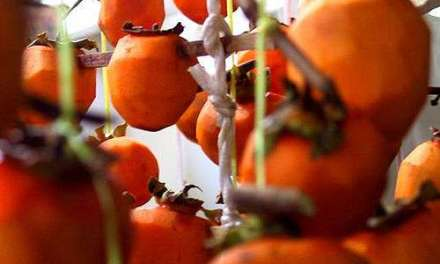 Persimmons and Tea and Beyond