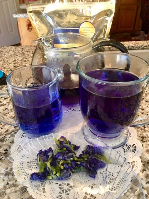 The Blue Butterfly Pea Flower