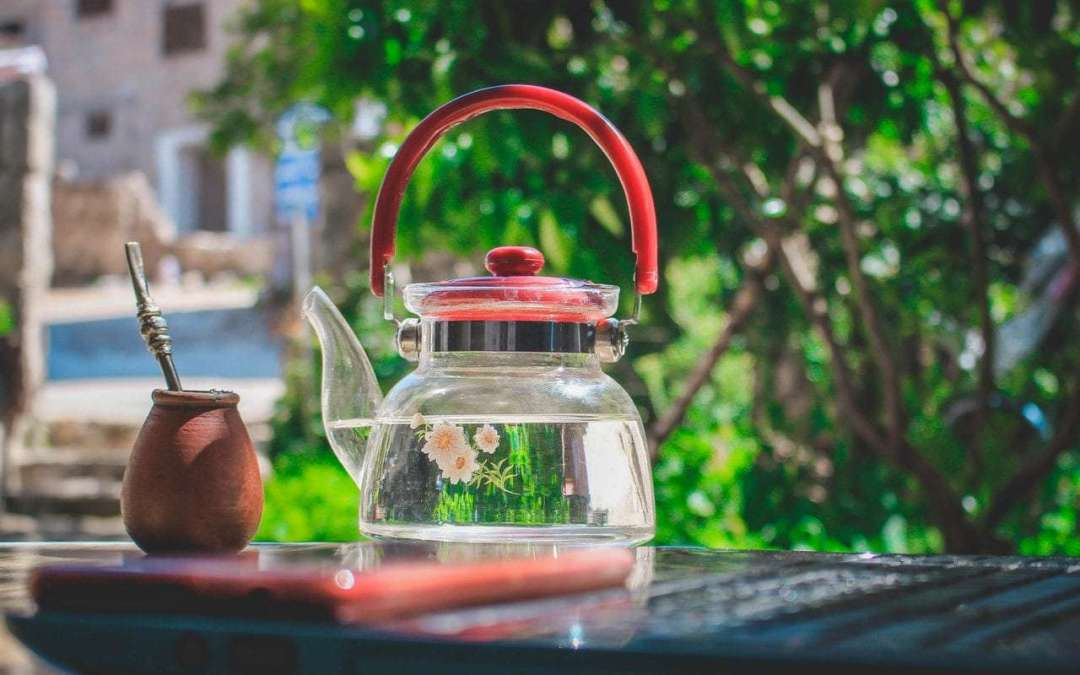 Best Plants to Choose for the Ultimate Tea Garden