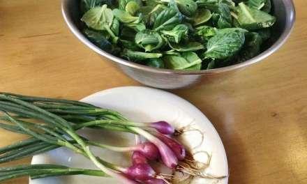 Tea and Vegetable Tonic