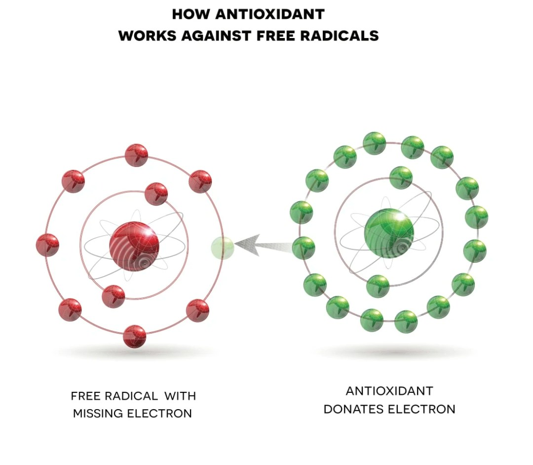 How Antioxidants work against free radicals - from shutterstock license