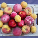 Stone Fruit with Tea and Cookies