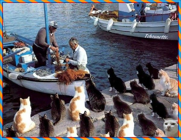 """Résultat de recherche d'images pour """"chats attendent poisson"""""""