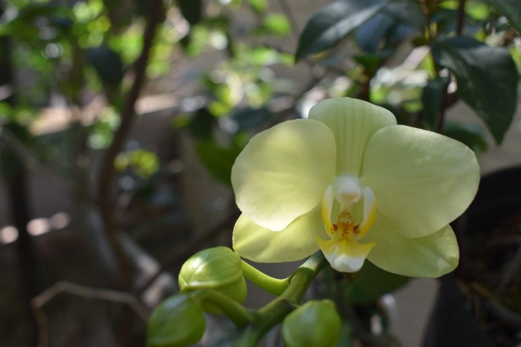 養在飲料杯裹的蘭花,蝴蝶蘭