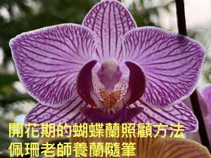 蝴蝶蘭照顧 蝴蝶蘭種植 蝴蝶蘭怎麼養 第三世多杰羌佛