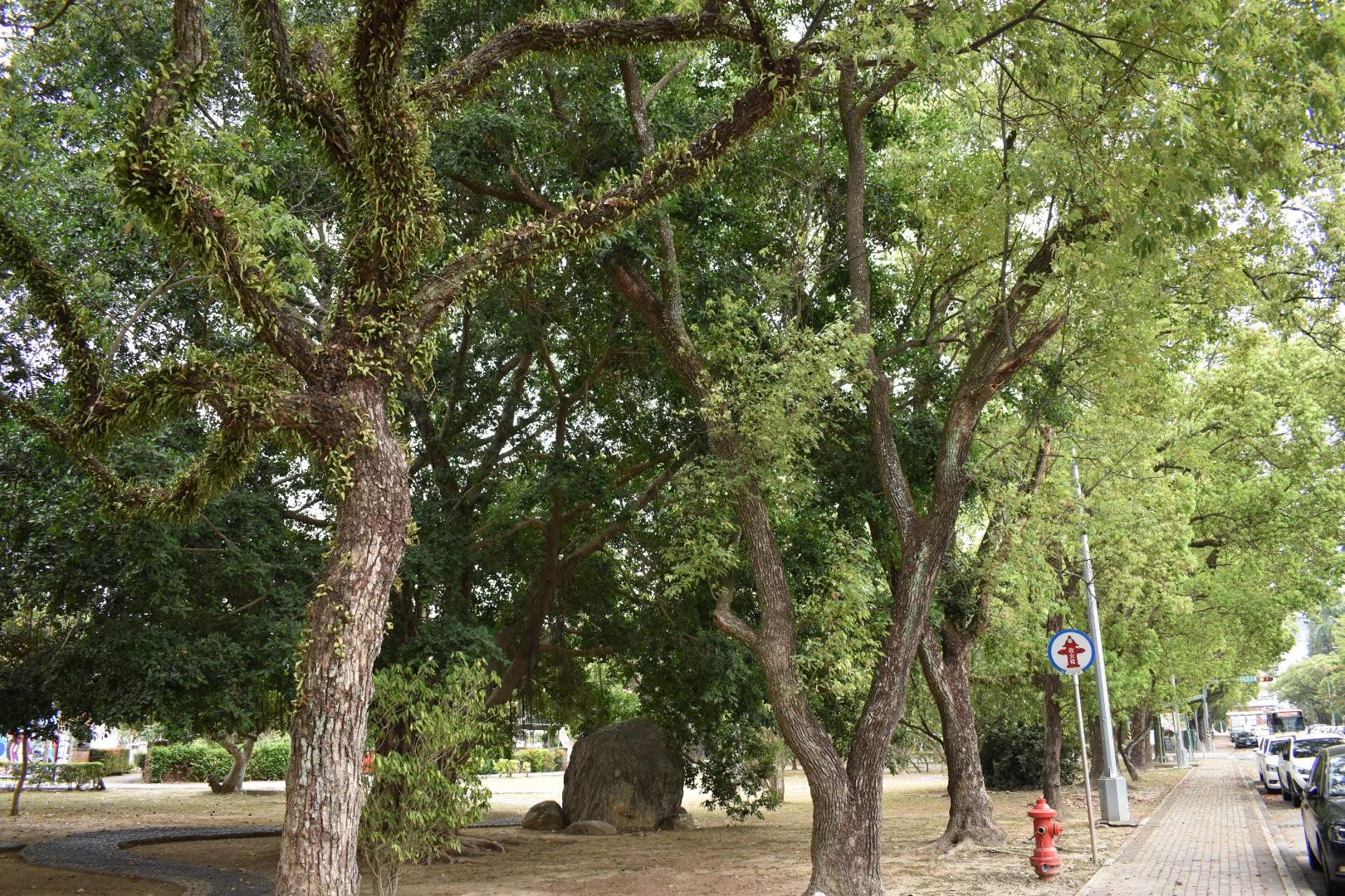 昔日的省府花園-中興新村,來一場華麗轉身吧