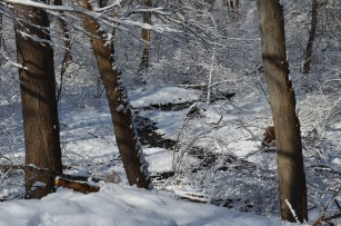 Our lovely brook gently meandering through the forest