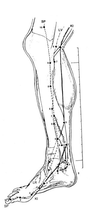 Acupuncture Point Diagrams
