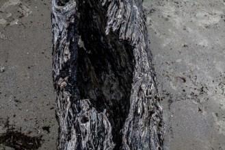 Jekyll Driftwood 24