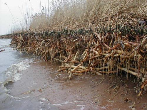 Reeds06