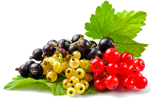 Image result for currants