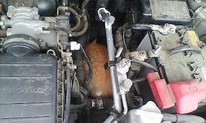 車 猫 対策 2