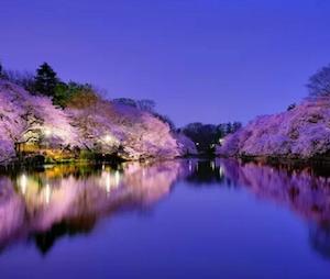 春 東京 ドライブ デート スポット 6