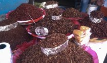 chapulines, Mercado 20 noviembre (yes, I ate the garlic chile ones)