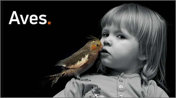Cabecera Aves +KOTA TD2