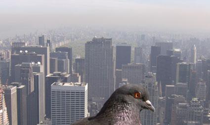 Nueva York, contaminación