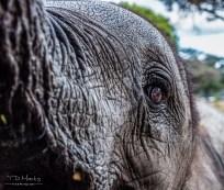 Elephant Calf 5