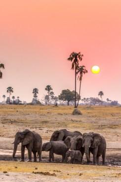 Elephant Herd 2
