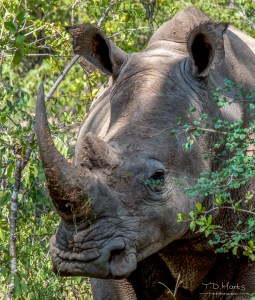 White Rhino 16