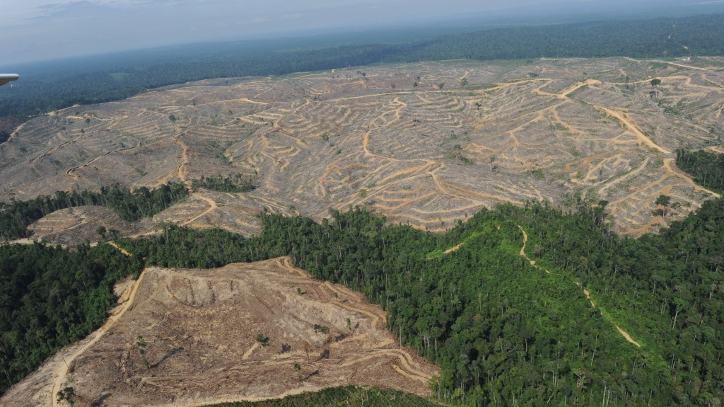 Heavily logged concession on the Indonesian island of Sumatra, in 2010. [Image: wgbh]