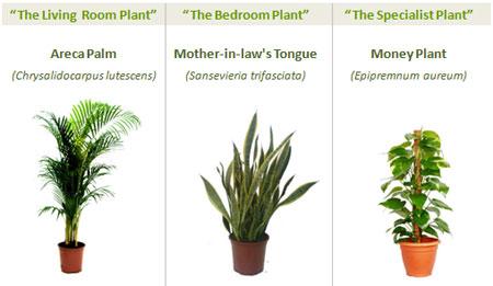Tres plantas que purifican el aire