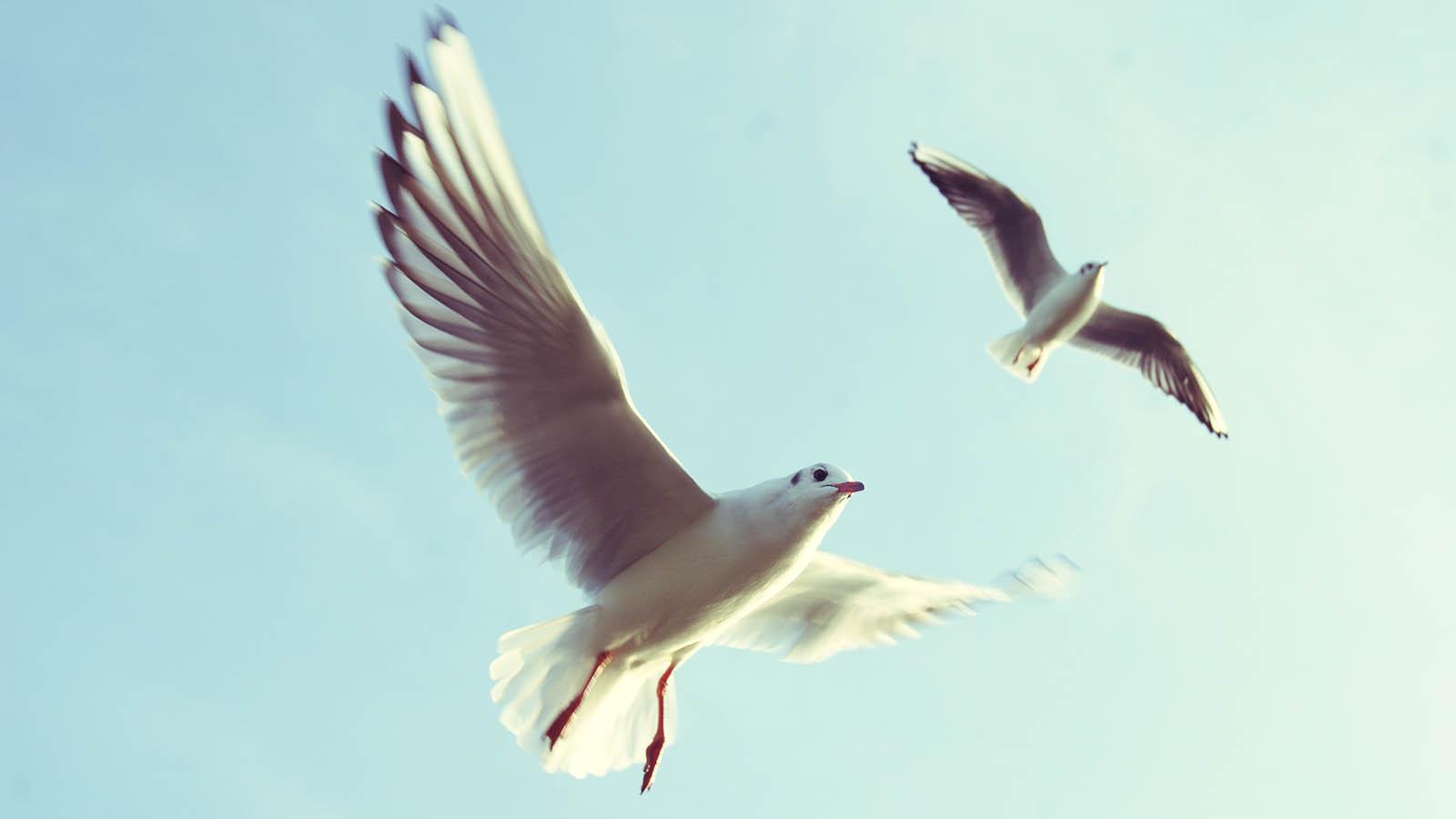 slider-seagull