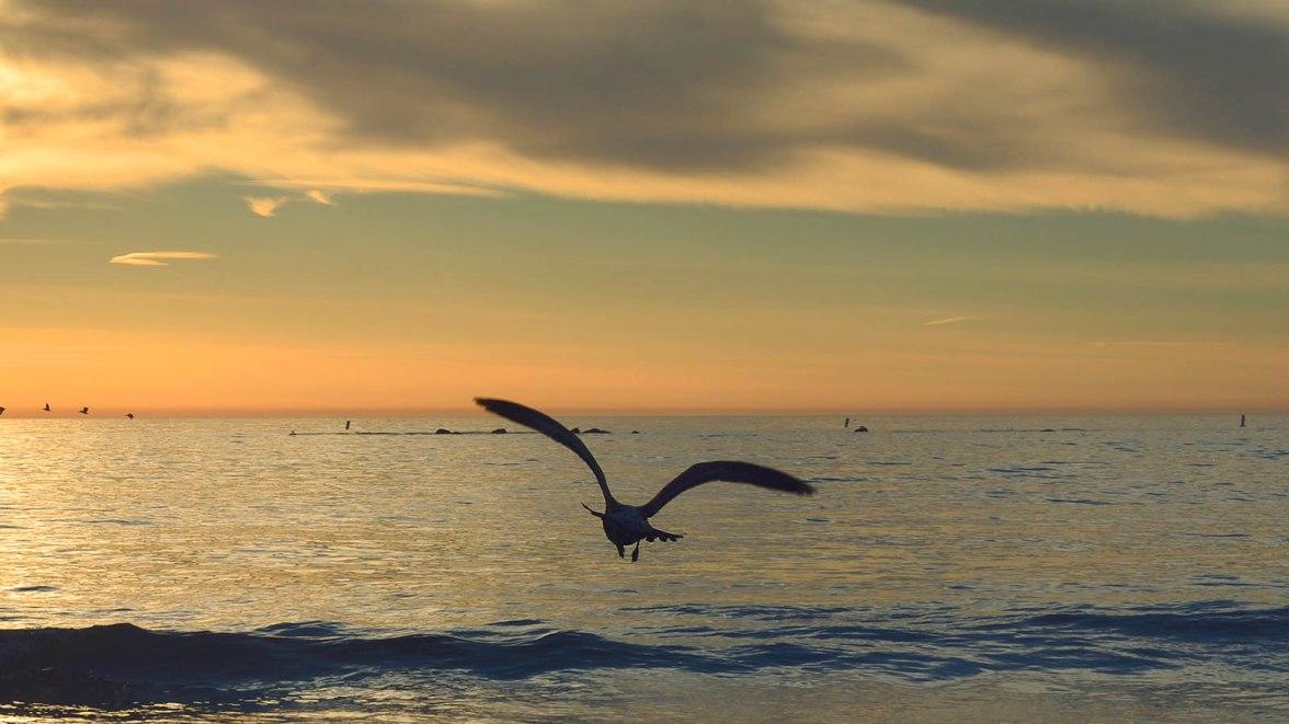 slider-seagullsunset
