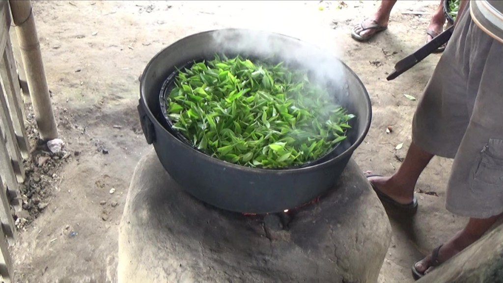 Processing raw leaves at Folklore Tea in Assam. Photos courtesy Folklore Tea.