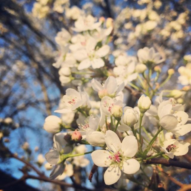 spring in Nashville