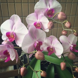 orchids, spring, bsteis
