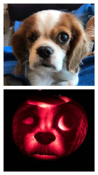 pumpkin, carving, Halloween, autumn, festivals, pumpkins, rescue dog, dog, pirate, adopt don't shop