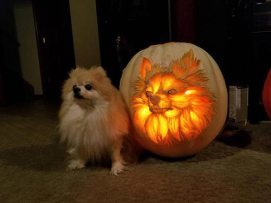 jack-o-lantern, pumpkin, carving, dog, inspiration